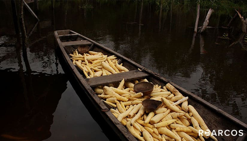 Ecossistema da Amazônia em Barco 75 Pés  - /