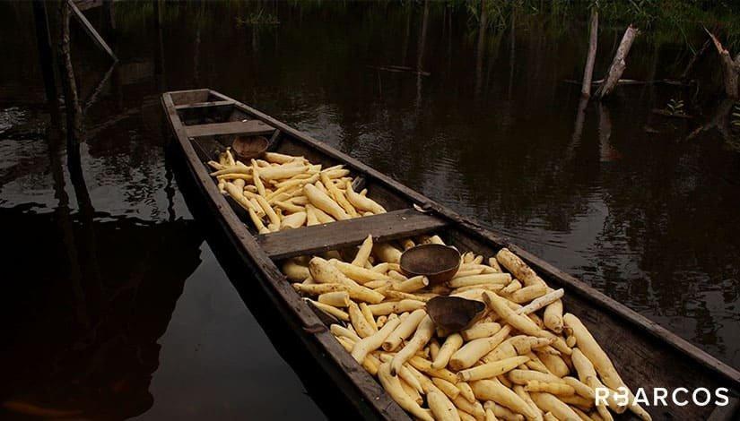 Ecossistema da Amazônia em Barco 86 Pés  - /